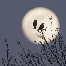 """Bild: """"Abenddämmern"""" von Uwe Kunze  / pixelio.de"""